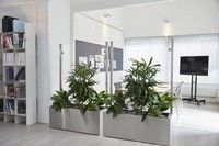 zwei-pflanzkübel-als-abtrennung-im-büro